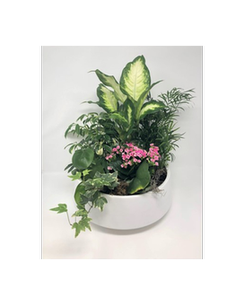 Plant Life Flower Arrangement
