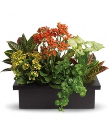 Stylish Plant Assortment Flower Arrangement