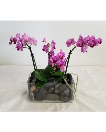 Orchids on the rocks Plant