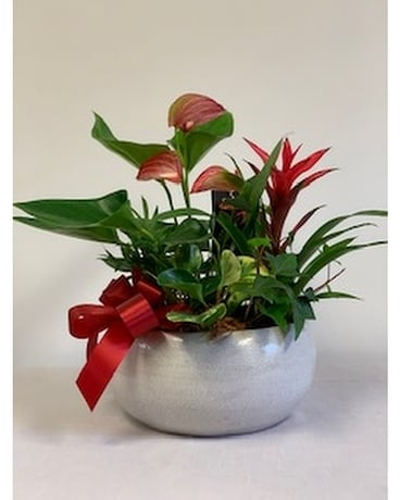 Large Ceramic Bromelia Anthirium Planter Flower Arrangement