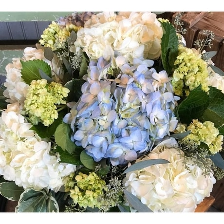 The Shoppe S Mixed Hydrangea Garden In Reading Ma The Flower