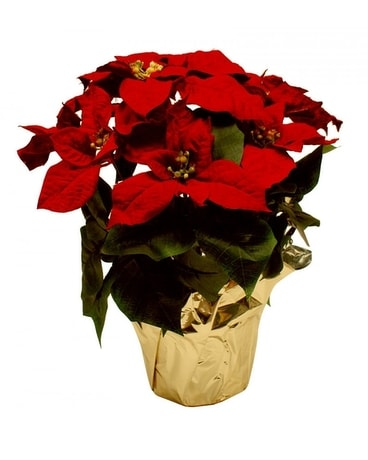 Small Red Poinsettia Flower Arrangement