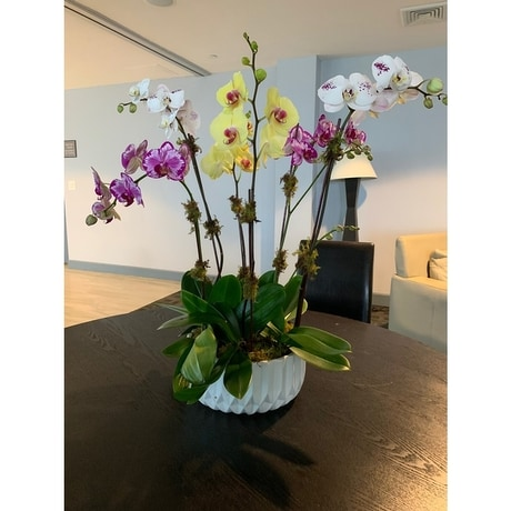 Chic Orchid Decor