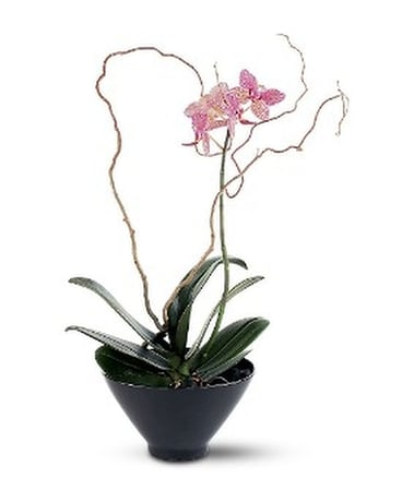 Miniature Lavender Orchid Custom product