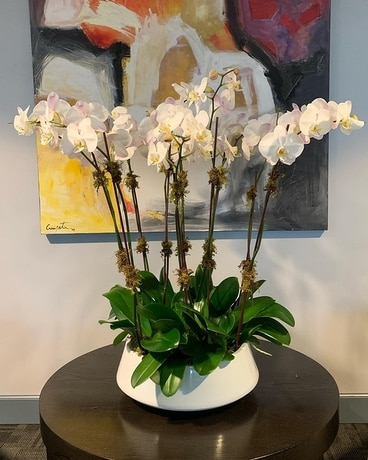 Lux Orchid Plant