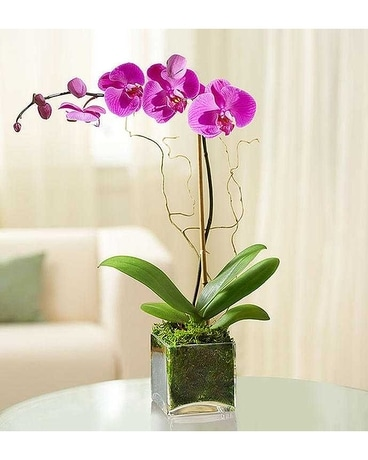 Orchid Moss Decor Plant