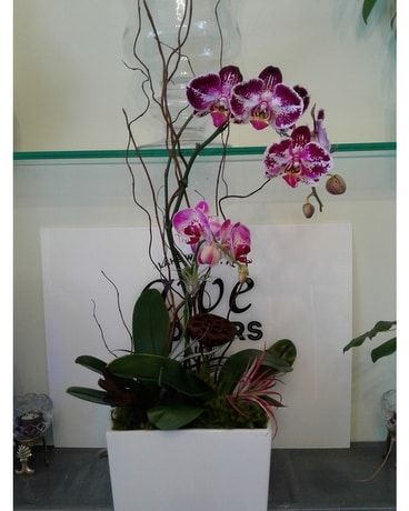 Purple Orchid Garden