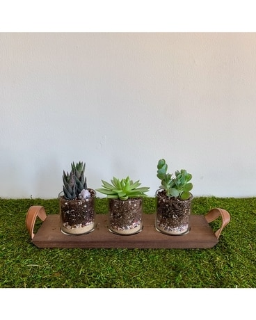 GeNell's Original Succulents and Scents Gifts