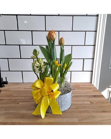 Spring Bulb Planter - Small Flower Arrangement