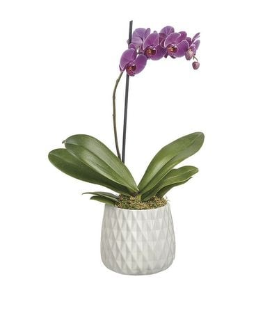 Architectural Orchid Plant Flower Arrangement