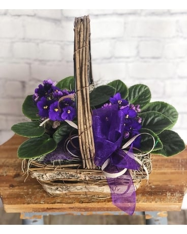 The Blooming Violet Plant