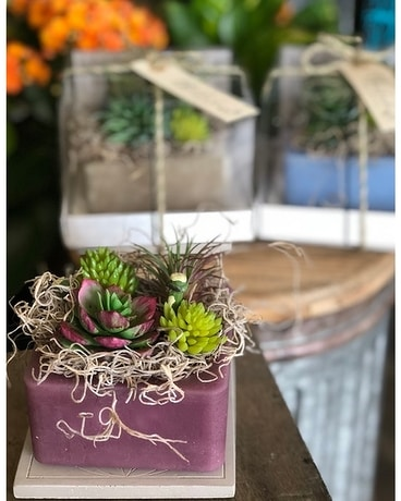 Scented Succulents Gifts