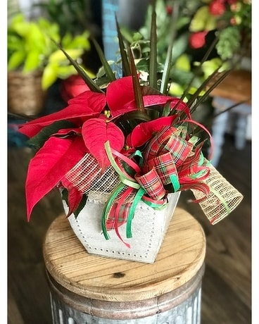 Holiday Planter Plant