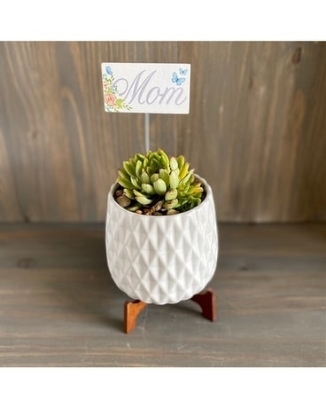 Geometric Succulent Flower Arrangement