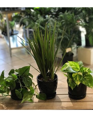 101 Black Trio Planter Set Plant