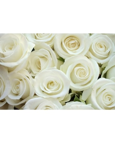 Dozen Roses - White Flower Arrangement