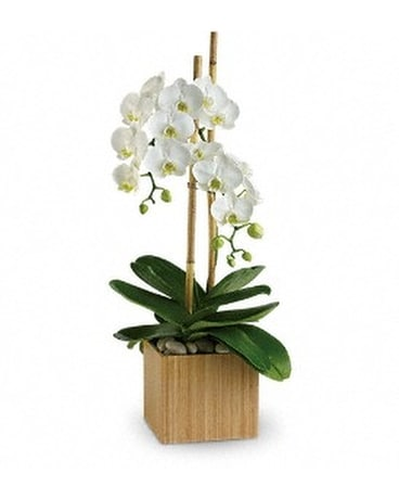 Teleflora's Opulent Orchids Flower Arrangement
