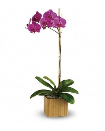 Teleflora's Imperial Purple Orchid Flower Arrangement