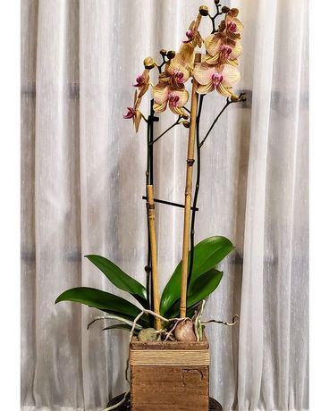 Elegant Orchid Flower Arrangement