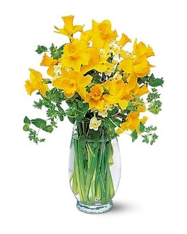Charming Daffodils Flower Arrangement