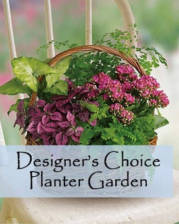 Designer's Choice Indoor Planter Flower Arrangement