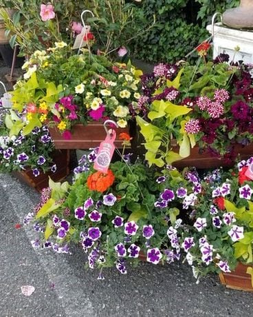Hanging Basket Flower Arrangement