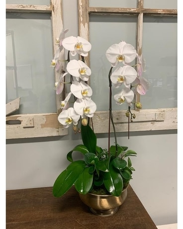 Golden Beauty Orchid Planter