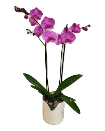 Imperial Orchid Flower Arrangement
