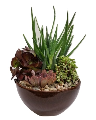Large Succulent Dish Garden Flower Arrangement