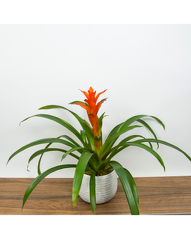 Orange Bromeliad Flower Arrangement