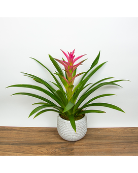 Pink Bromeliad Flower Arrangement