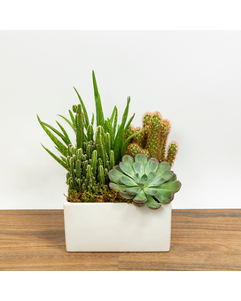Succulent and Cacti in Decorative Container Plant