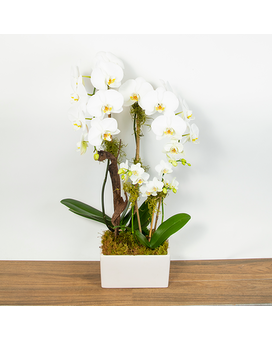 Orchid Deluxe Flower Arrangement