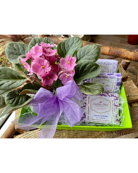 Violet with Scented Soaps Custom product