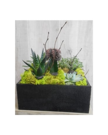 Contemporary Cacti (1223)