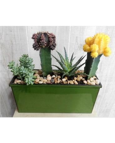 Plants Delivery Dallas TX - Petals & Stems Florist
