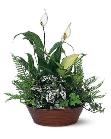 White Garden by Petals & Stems (TF139-2) Flower Arrangement