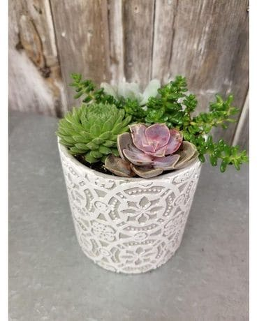 Succulent Planter Country Chic Flower Arrangement