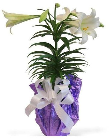Easter Lily Single Flower Arrangement