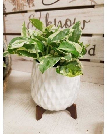 Modern White Ceramic Planter Flower Arrangement