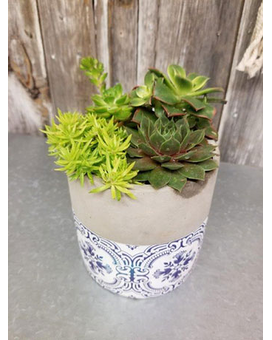 Succulent Planter Country Blue Flower Arrangement