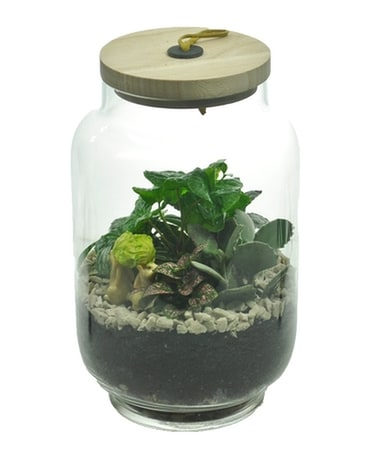 Terrarium with Wood Lid Plant