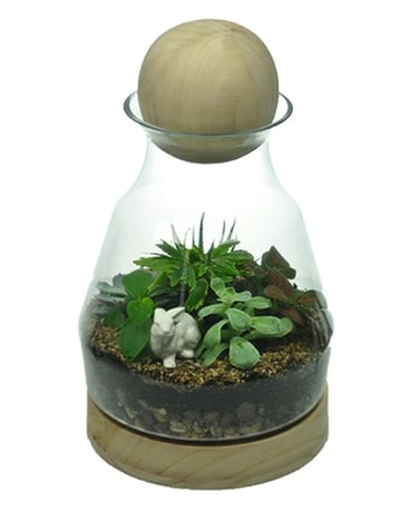 Terrarium with Wood Ball Plant