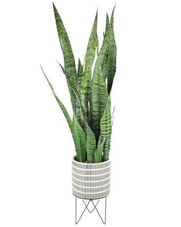 Sansevieria In Plant Stand Flower Arrangement