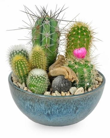 Cactus Garden Flower Arrangement