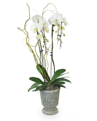 Orchid Pedestal Flower Arrangement