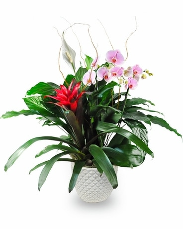 Paradise Planter Flower Arrangement
