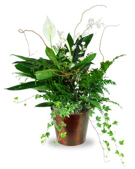 Rainforest Retreat Planter