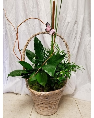 Pink Butterful Plant Flower Arrangement
