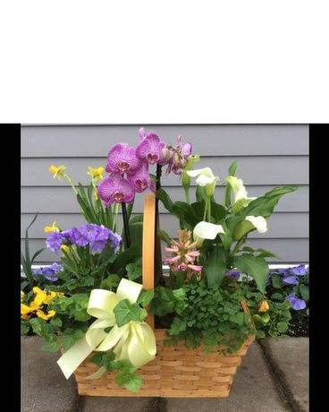 Seasonal Flowering Plant Basket Basket Arrangement